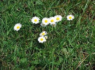 Gras - auch im Garten willkommen