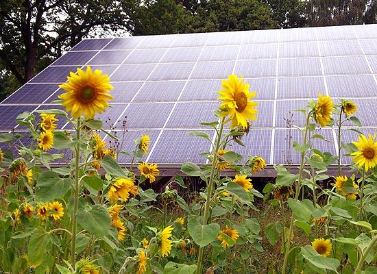Sonnenblumen mit Photovoltaik
