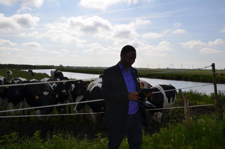 Frank vor besagten Kühen